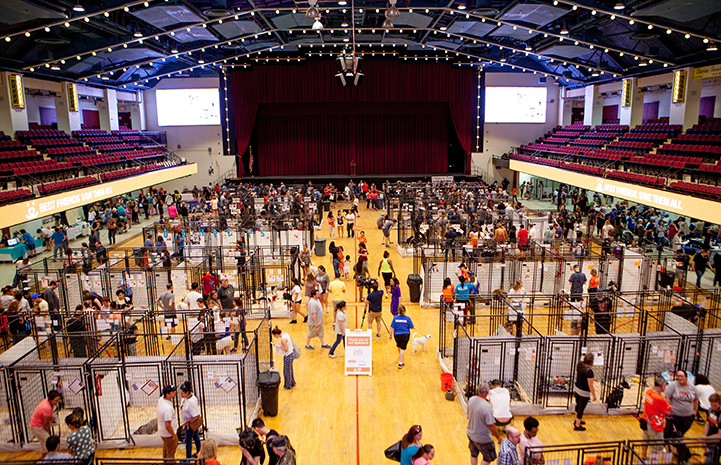 New York Super Adoption crowd from above at the Westchester County Center