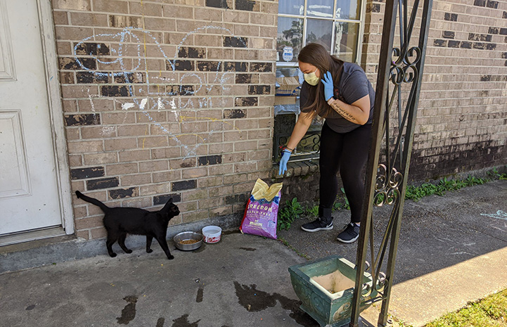 Woman delivering a bag of food onto a porch while a cat looks on