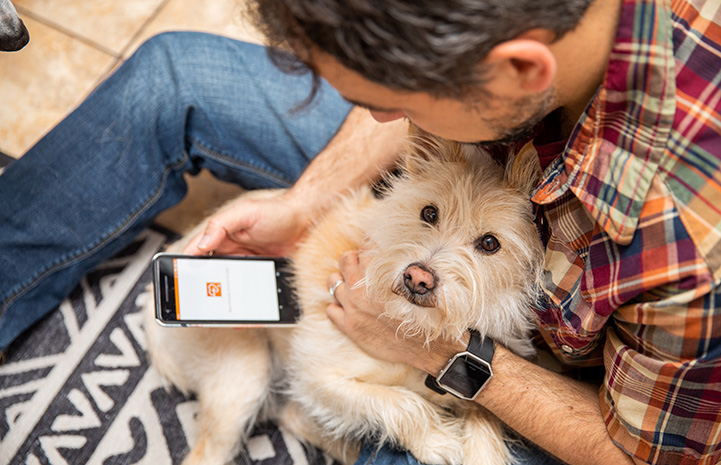 Man holding a fluffy terrier type dog on his lap while looking at his smart phone