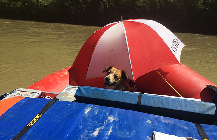 The rafters finally made it downstream with Juanita the dog, to where they could get her help