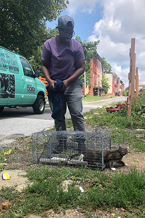 Man from BARCS letting a calico cat go out of a humane trap