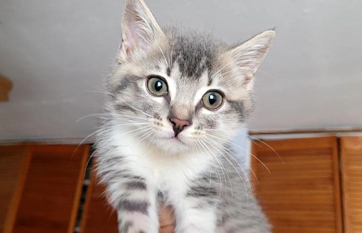 The face of Kramer the kitten