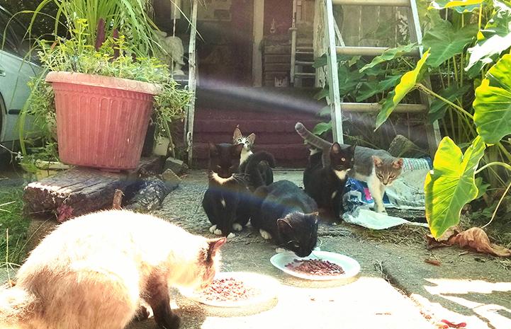 Community cats helped through trap-neuter-return (TNR)