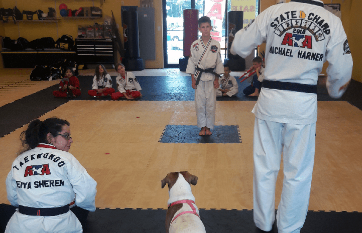 Alice the dog observing a taekwondo class