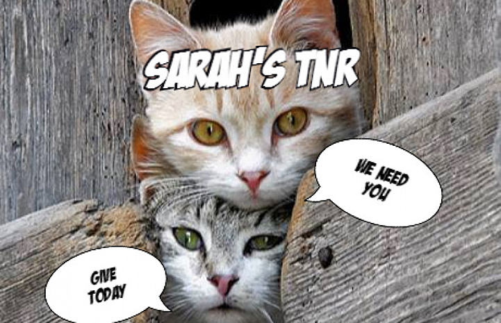 Sarah raised enough money to open her own TNR organization