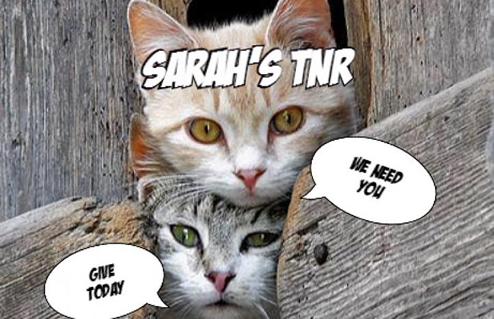 Sarah raised enough money to open her own TNR organization
