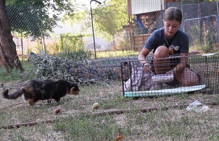Sarah Jones setting up a humane trap for TNR