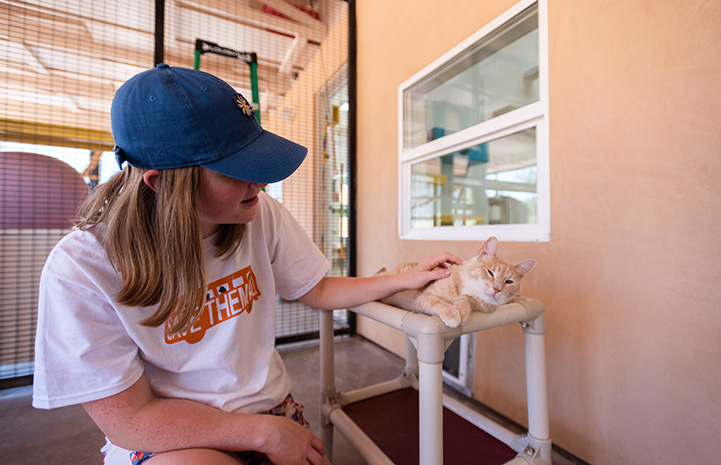 Gianna Richason petting an orange tabby cat who is lying in a bed at cats in Cat World