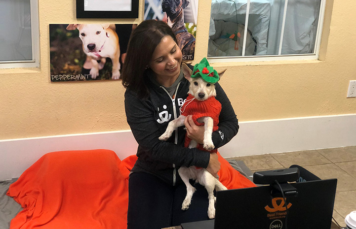 Woman holding Trudy the terrier who is dressed up as an elf