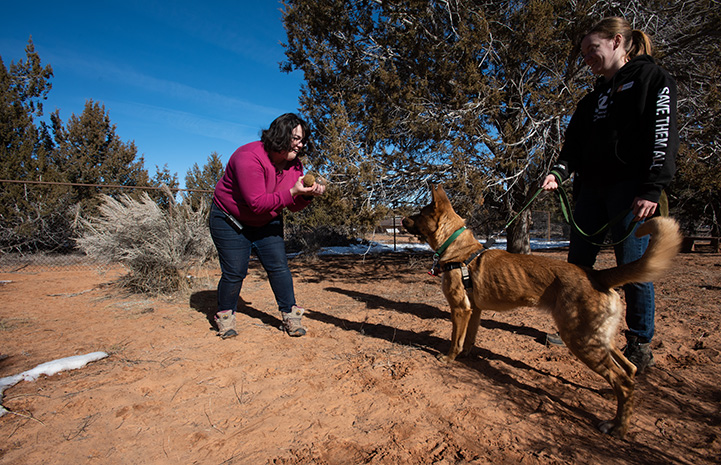 Two women with Bonneville the dog training search and rescue with a toy