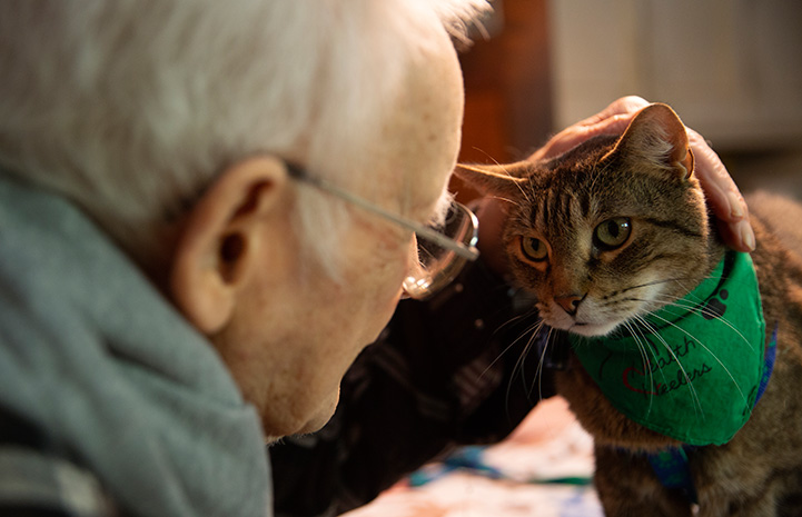 Senior man petting Hercules the therapy cat, who is wearing a green bandanna