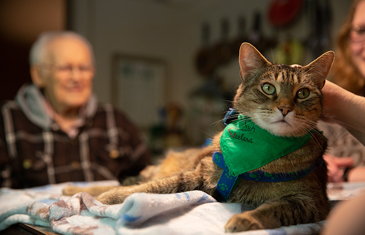 Hercules the therapy cat wearing a green bandanna and having someone pet him while a man watches