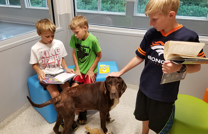Three young boys reading to Jake the dog at the Jacksonville Humane Society