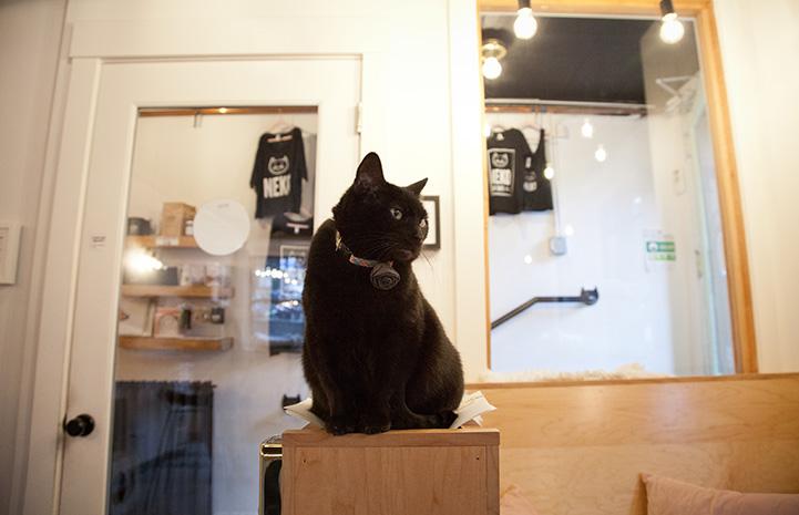 Black cat at the NEKO Cafe