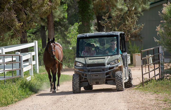 Morry the horse walking next to four-wheel drive vehicle