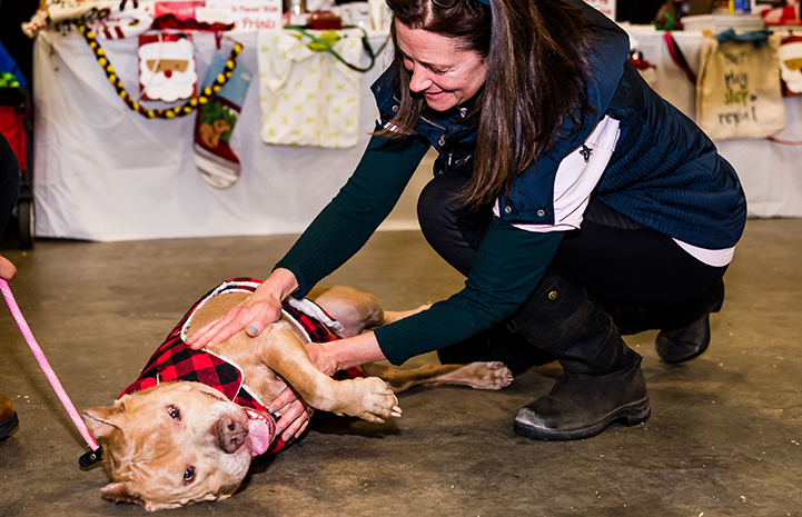 Blue, the three-legged dog, getting a belly rub from a woman at the December 2017 New York Super Adoption
