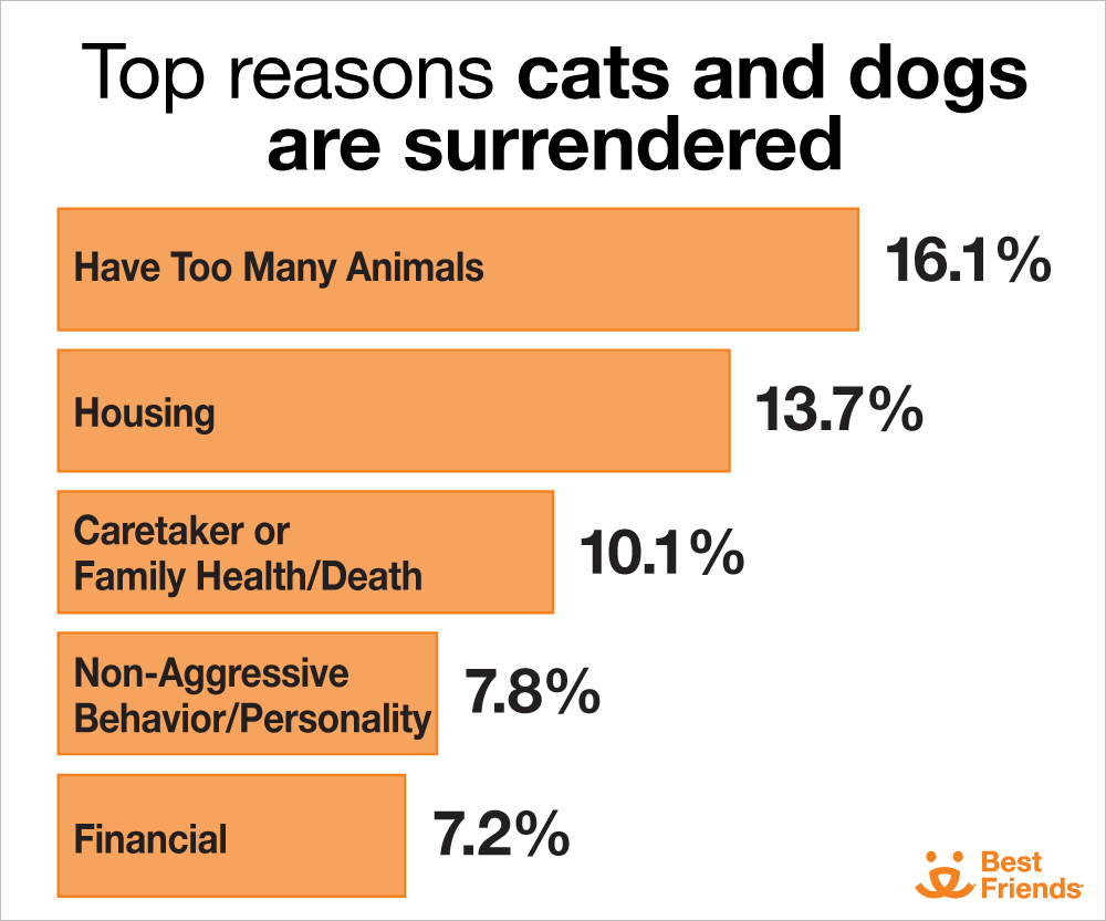 Top reasons cats and dogs are surrendered