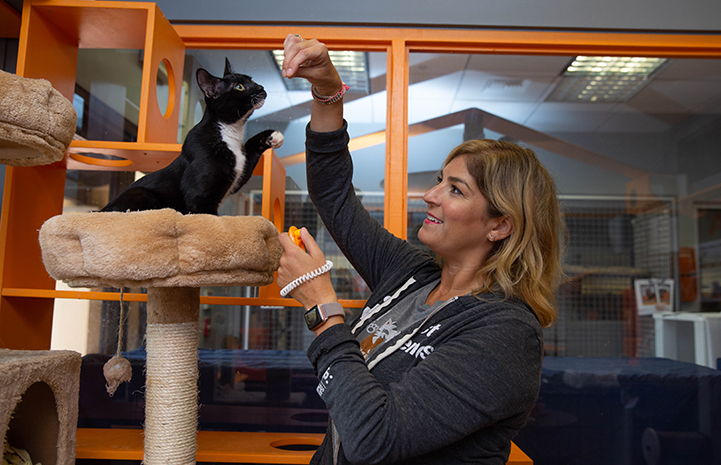 Black and white cat on a cat tree being trained by a woman with a treat and clicker