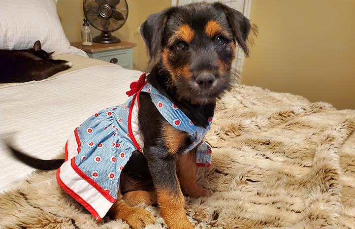 Isiah the dog wearing an outfit