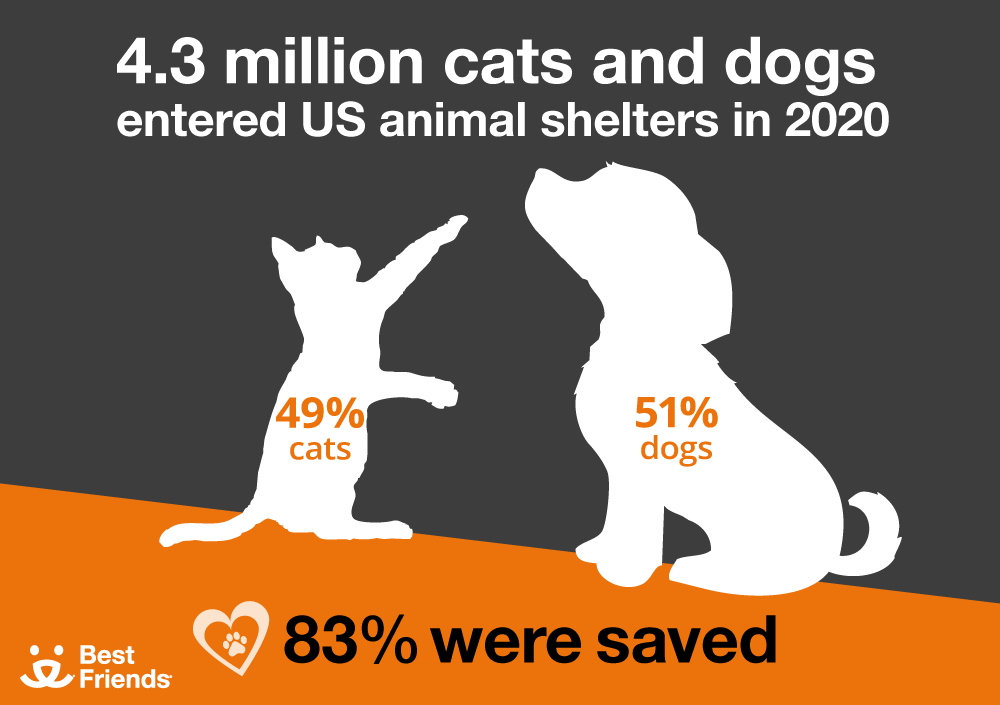 Animals in Shelters in 2020