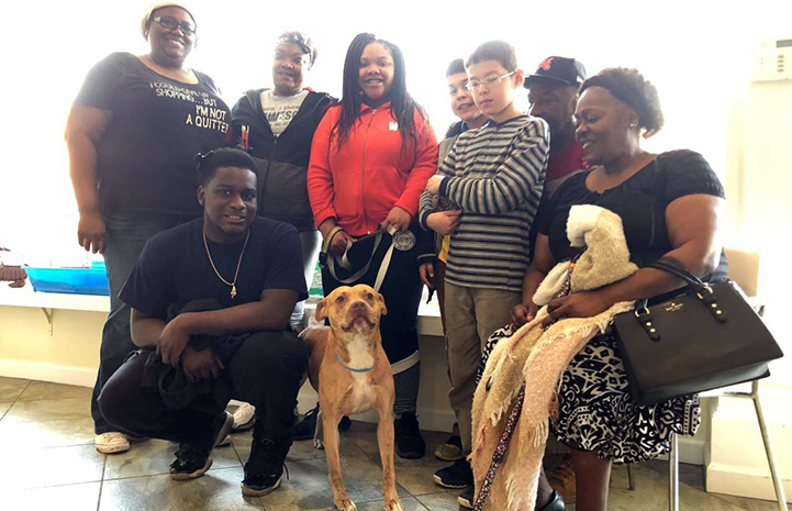 Polly Pocket the dog getting adopted by a large family