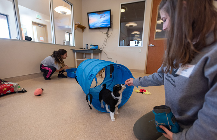 University student giving a treat to a small puppy who had walked through a blue tube