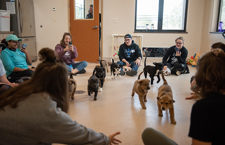Group of university students sitting on the floor participating in puppy class