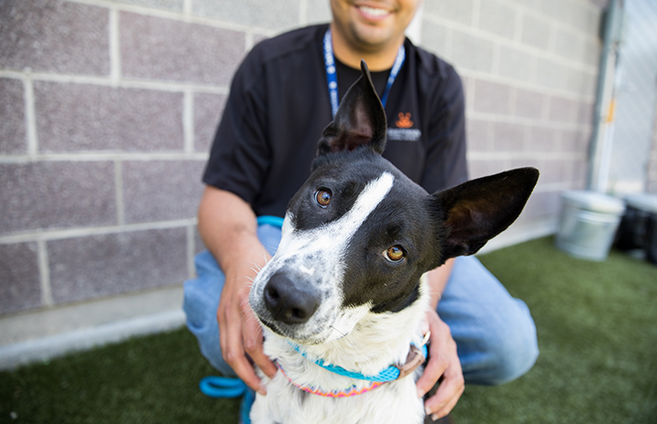 Black and white dog with tilted head from Houston, with a smiling man behind him