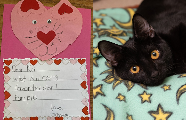 Handmade valentine to Kai the cat next to a photo of Kai