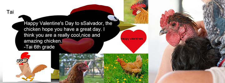 Computer generated valentine to Salvador the rooster next to a photo of Salvador