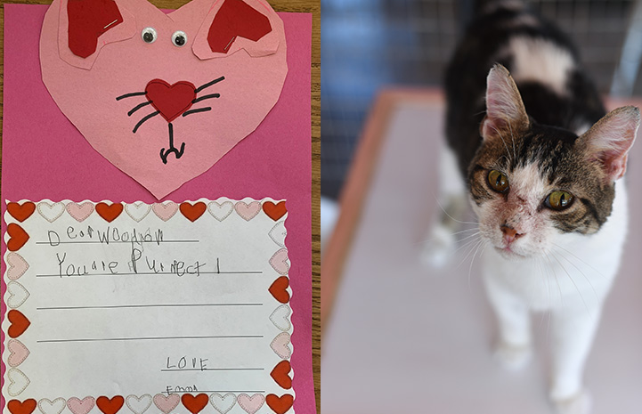 Handmade valentine to Woodrow the cat next to a photo of Woodrow