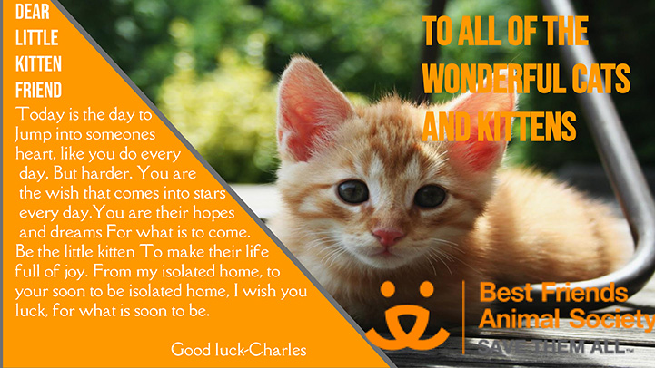Computer generated valentine to kittens with a photo of an orange tabby kitten