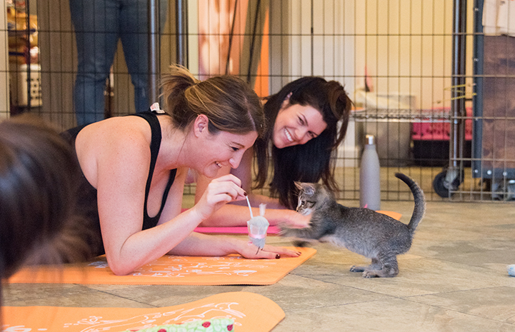 Two women lying on their mats doing yoga playing with a tabby kitten