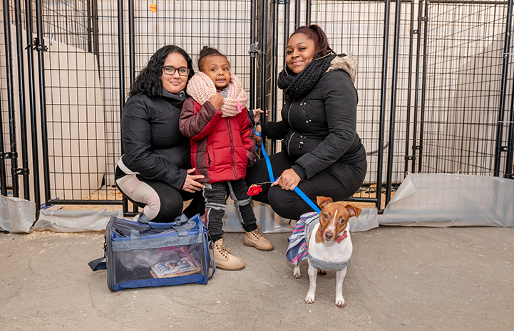Family adopting a small brown and white dog
