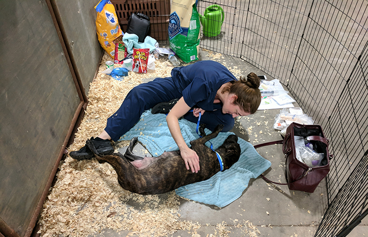 Woman comforting a dog at the at the Rescue and Reunite Center after Hurricane Harvey