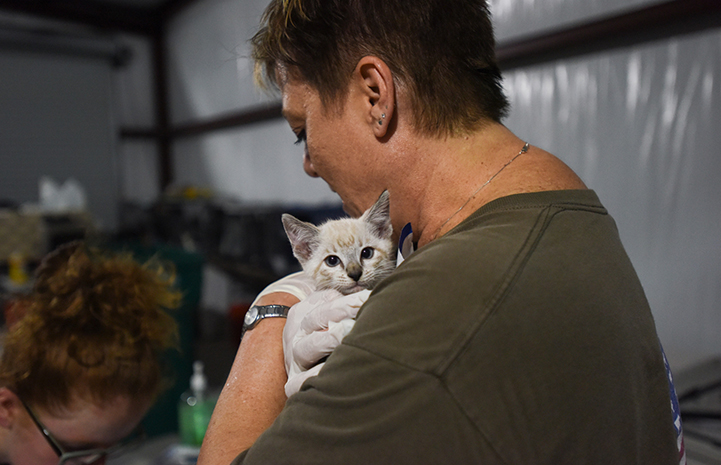 Woman holding a kitten at the at the Rescue and Reunite Center after Hurricane Harvey
