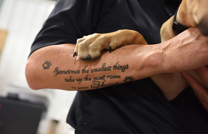 Dog's paw holding a tattooed arm at the at the Rescue and Reunite Center after Hurricane Harvey