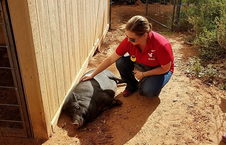 Although Team Red, White & Blue (RWB) dedicated hours of time to cleanup work at Marshall's Piggy Paradise, they took in some socializing time too