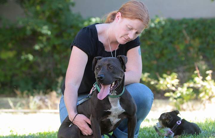 Lance the Vicktory dog needed to develop enough confidence to pass his Canine Good Citizen (CGC) test
