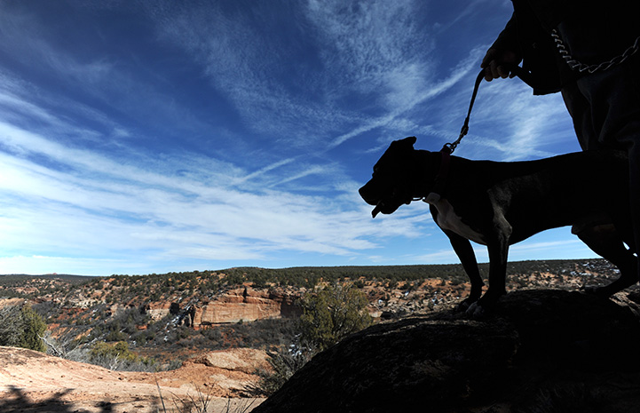 Silhouette of Mel the Vicktory dog on a walk with a person looking down at Angel Canyon