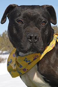 Mel the Vicktory dog wearing a yellow bandanna
