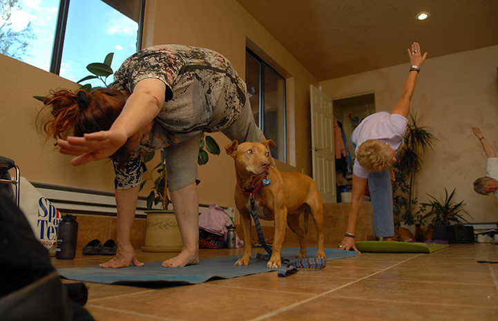 Vicktory dog enjoys a yoga class