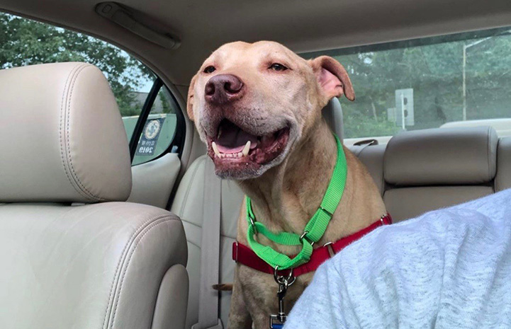Tabasco the dog in the back seat of a car