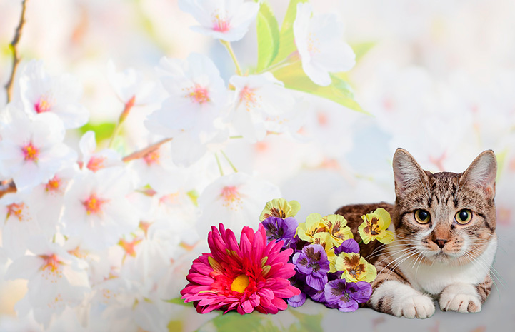 Kitten next to flowers with a flower background