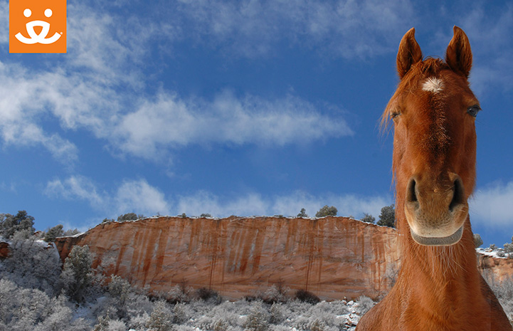 Brown horse in front of red cliff with snow background with a Best Friends logo