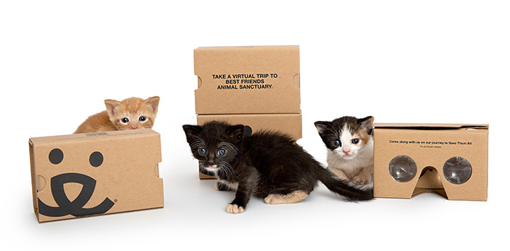 Three kittens playing around Best Friends cardboard virtual reality viewers
