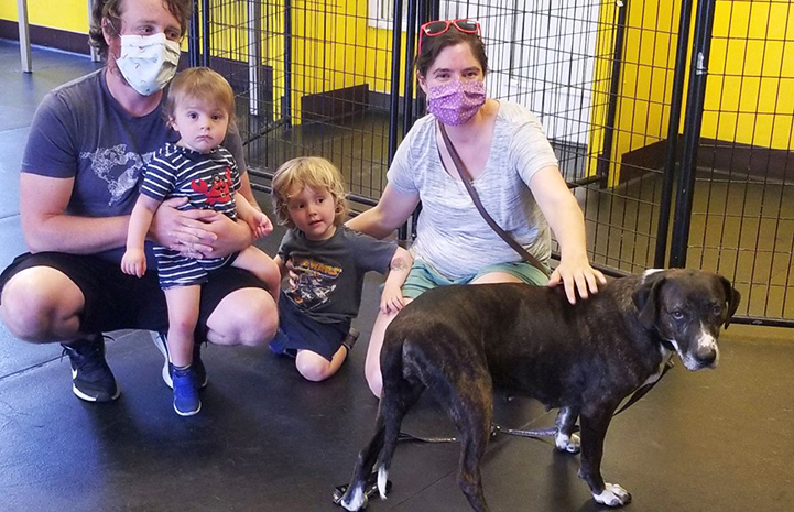 Family adopting a black and white dog from Motley Zoo Animal Rescue