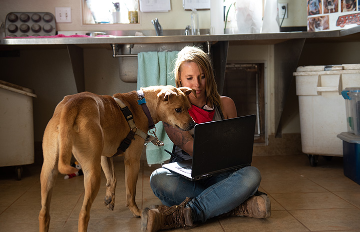 Scooby the dog and a woman looking down at a laptop screen doing a virtual meet-and-greet