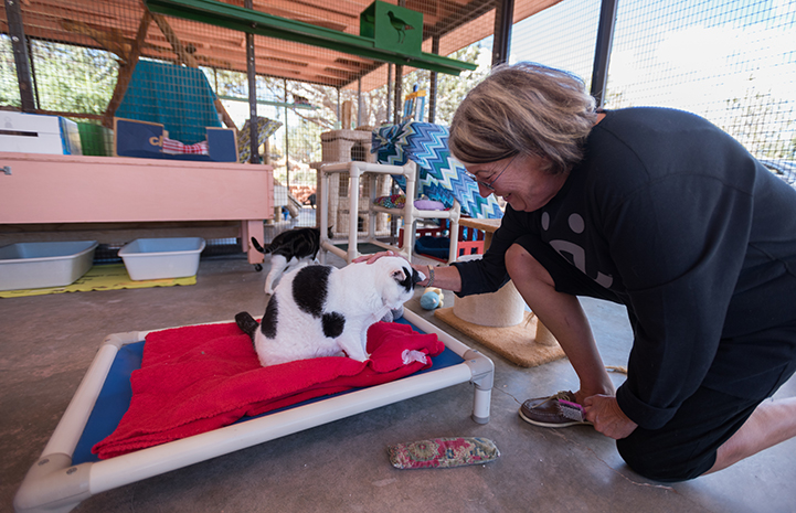 Volunteer Alma Davenport scratching the head of a black and white cat while helping at Cat World