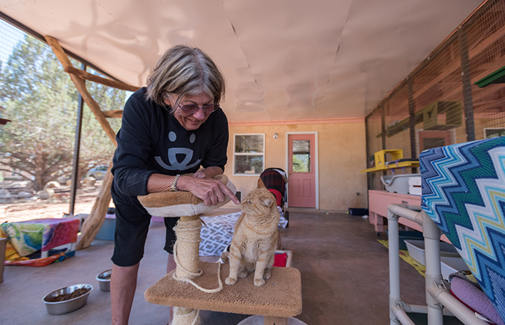 Volunteer Alma Davenport smiling and sticking her finger out for an orange tabby cat to sniff